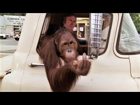 Clyde the Orangutan Gets Rowdy
