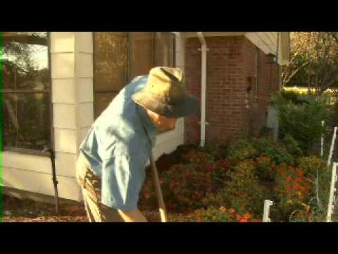 Mulch and Termites - MSU Extension Service