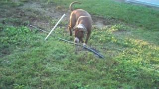 Casita Big Dog Rescue Training Tip - Proper Exercise