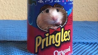 Packages of Pringles Chips Obstacle Course for hamster 🐹