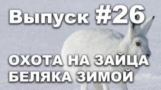 Выпуск 26: Охота на зайца беляка зимой видео 2013