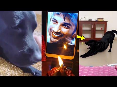 Shweta Singh Kirti Posts Sushant Singh Rajput Dog Fudge CUTE Yawning Video After #cbiforssr Progress
