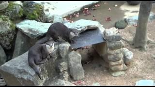 H24.12.16 とくしま動物園のぬいぐるみ動物.