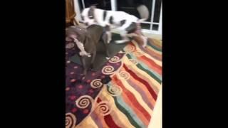 Twerking pit giving head