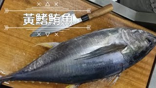 【海洋主廚愛爾文】如何處理黃鰭鮪魚!!   How to filet yellow fin tuna.
