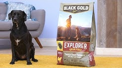 Black Gold Explorer Dog Food | Chewy