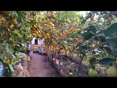 Лимонарий в Запорожье