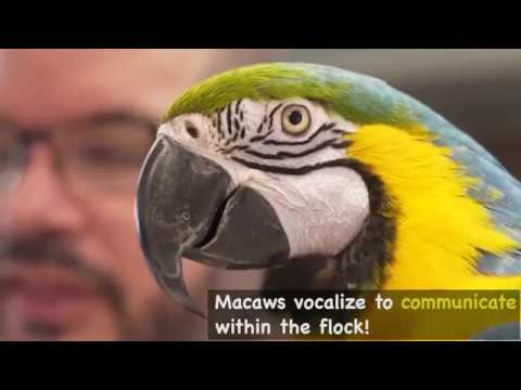 Macaw Fast Facts