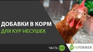ДОБАВКИ В КОРМ ДЛЯ КУР НЕСУШЕК (Часть 16): чтобы курица несла золотые яйца и развивалась!