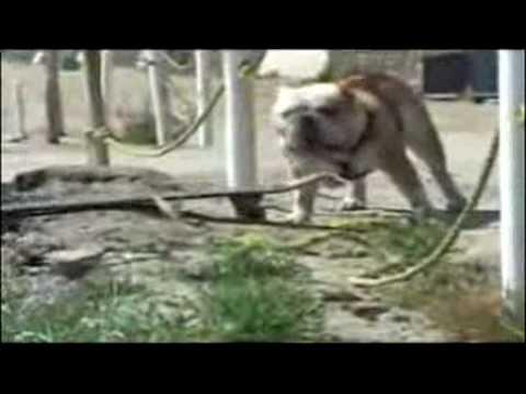 Những con vật ngộ nghĩnh.com.flv