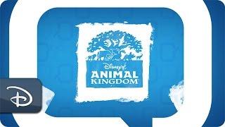 Disney Parks Moms Panel | Planning Tips for Animal Kingdom