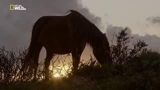 Nat Geo Wild - Дикая природа Великобритании / Wild Great Britain 01  Возвышенности