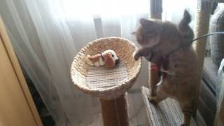 Кот Дарсик.Кошачий дом своими руками!😊☺😊