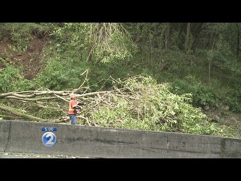 Invasive trees pose a threat along Pali Hwy.