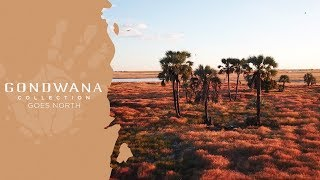 King Nehale/Gondwana Collection Goes North