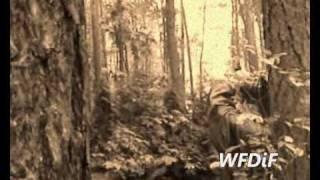 O zwierzętach leśnych