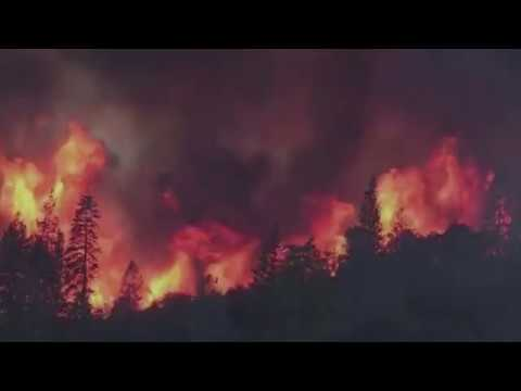 Fire in the Forest Ecosystem | California Academy of Sciences