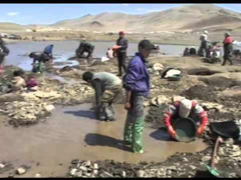 Informal gold mining in Mongolia