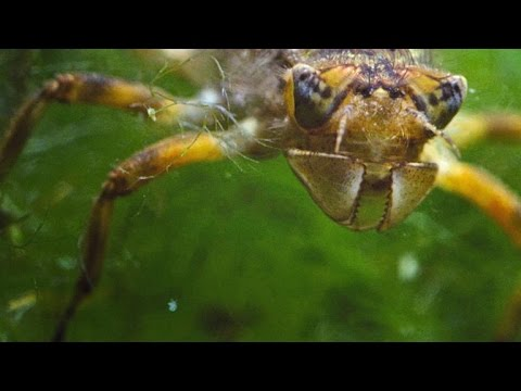 Stunning Time-Lapse Of A Dragonfly Growing Wings