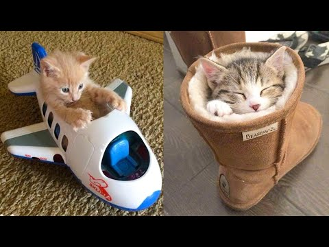 Baby Cats - Cute and Funny Cat Videos Compilation #21 | Aww Animals