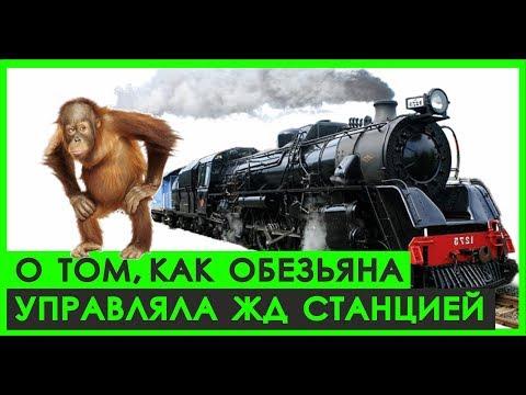 Вопрос: Как провезти обезьяну в поезде?