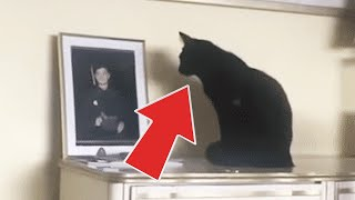 Black Cat Kept Staring At Owner's Son's Photo Leading Her To Dig Up The Truth