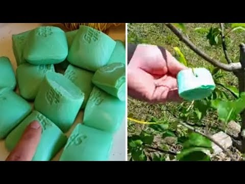 This Is Why You Should Put Irish Spring Soap In Your Garden!