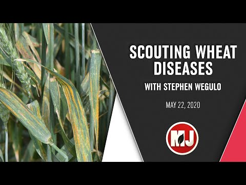 Scouting Wheat Diseases | Stephen Wegulo | May 22, 2020