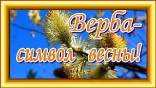 Верба символ весны! Поздравляю с вербным воскресеньем!