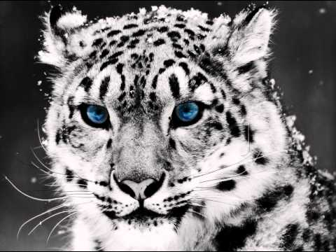 Snow Leopard (Song)