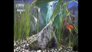 Как сделать (склеить) аквариум самому! Выпуск 1 серия1.avi