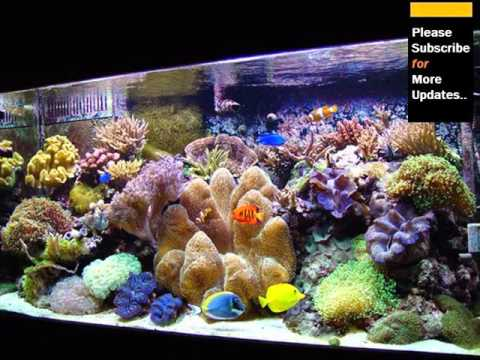 Inside pics of saltwater aquarium youtube for Red saltwater fish