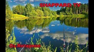 Русская рыбалка 4 Карповый рай РОЗЫГРЫШИ НАЖИВОК И БЛЕСЕН