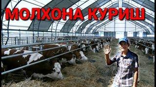 Мол БОКИШ БИЗНЕСИНИ БОШЛАШ 300 млн сум