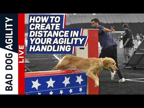 How to Create Distance in Your Agility Handling
