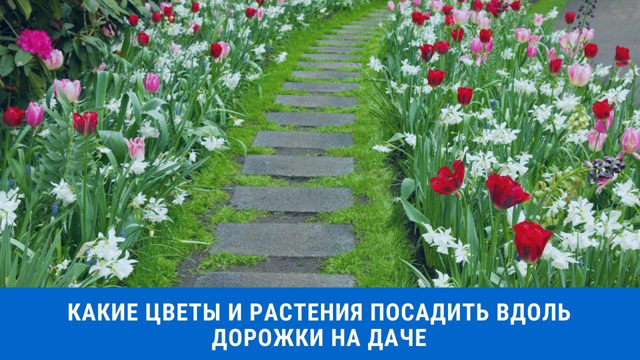 Какие цветы и растения посадить вдоль дорожки на даче, чтобы было красиво