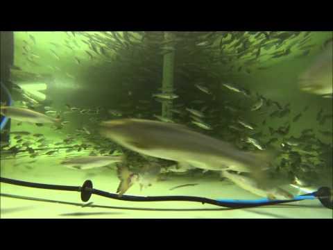 Institute for Marine & Antarctic Studies: Experimental Aquaculture Sneak Peek