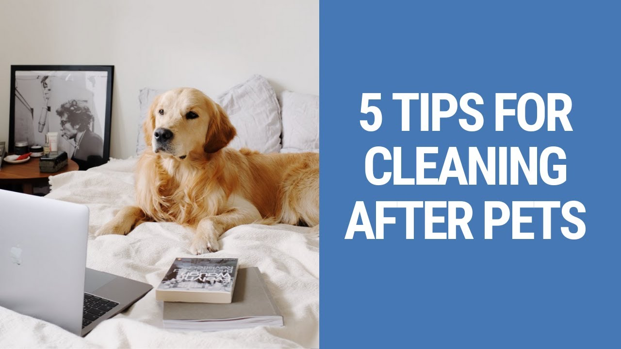 Essential Cleaning Tips For Dogs