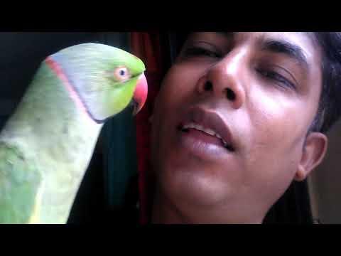 কথা বলা টিয়া পাখি ।। আজব টিয়া পাখি ।। টিয়া পাখি কথা বলে ।। আদিব ও মিঠু ।।Parrot Singing