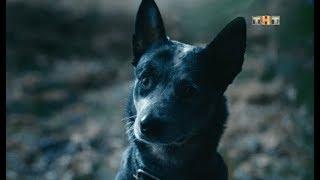 Какой породы собака Фомы из сериала Физрук 4 сезон?