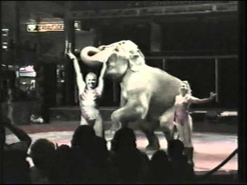 Hanneford Circus Highlights