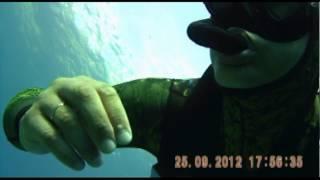 Хорватия(Хорватия 2012, подводное видео., 2012-11-19T01:15:02.000Z)
