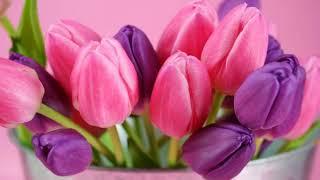 Видеофон Тюльпаны...Прекрасная музыка  и красивые цветы...