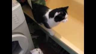 Жесть! Кот спасает котенка от потопления в ванне!!!!