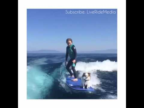 Girl & Her Pet Dog Awesome Surfing