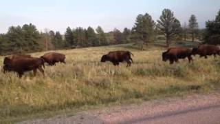 Kelli Smith sees Buffalo