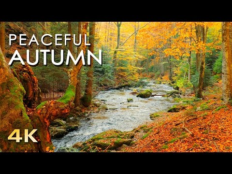 4K Autumn Forest - Relaxing Nature Video & River Sounds - NO MUSIC - 1 hour Ultra HD 2160p