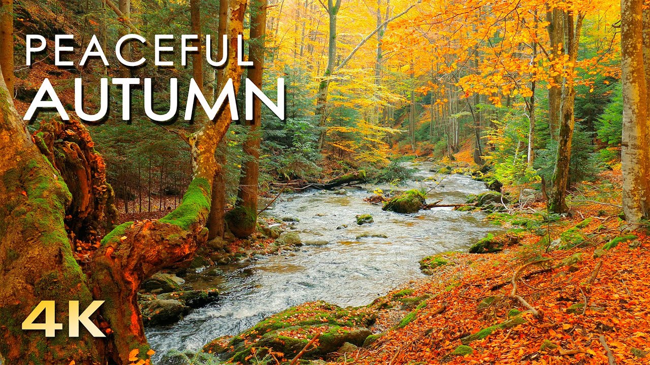4k Autumn Forest Relaxing Nature Video River Sounds No Music 1 Hour Ultra Hd 2160p