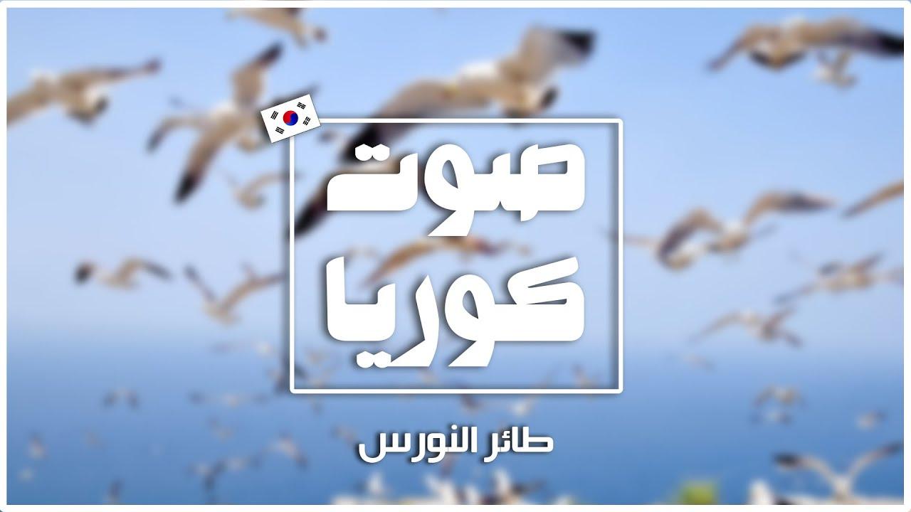 [صوت كوريا] صوت طائر النورس seagull [Korea Sound] #shorts
