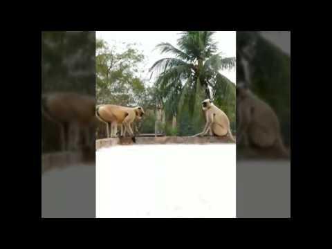Monkey XXX Video